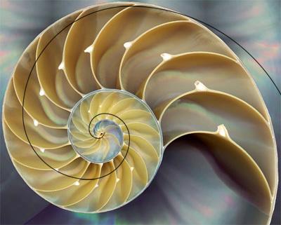 08-fibonacci-nature-nautilus3